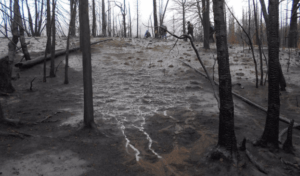 Post wildfire photo