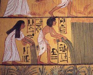 Image 2: Fresco depicting laborers pulling flax plants. Tomb of Sennedjem, New Kingdom, Dynasty XIX. Image from https://www.decktowel.com/pages/what-is-linen-an-introduction